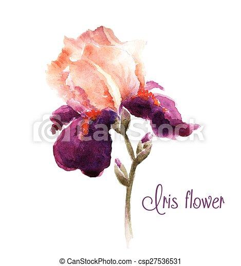 Aquarelle iris fleur bourgogne iris projects flower for Aquarelle fleurs