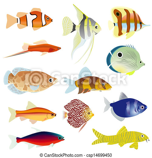Aquarium Fish Set Of Aquarium Fish The Illustration On A White