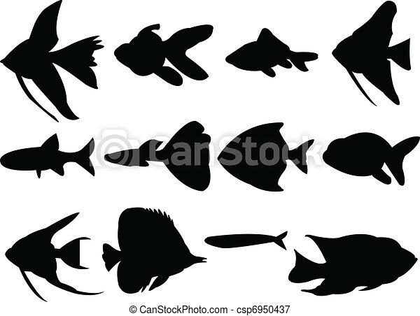 aquarium fish - csp6950437