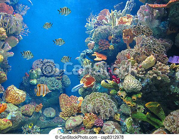 aquarium - csp8312978