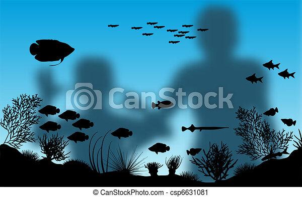 Aquarium - csp6631081