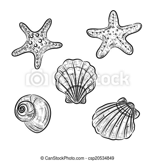 aquatic fauna drawing a sketch of starfish scallop and snail
