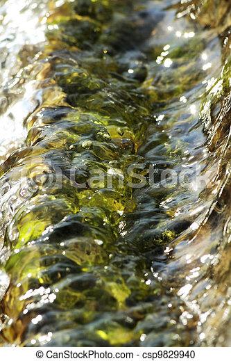 aquatic plants  - csp9829940