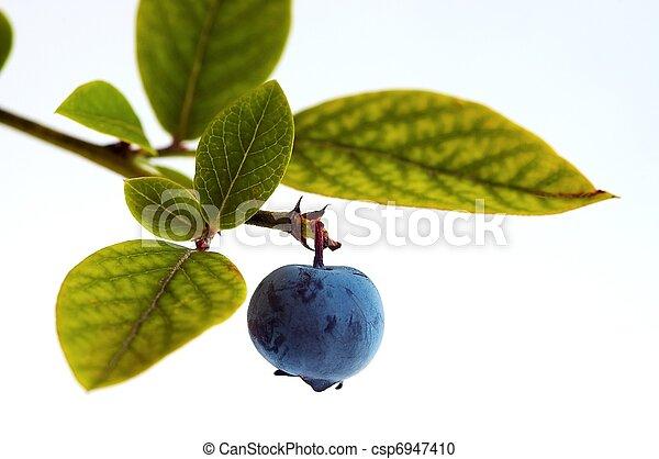 Blueberry - csp6947410