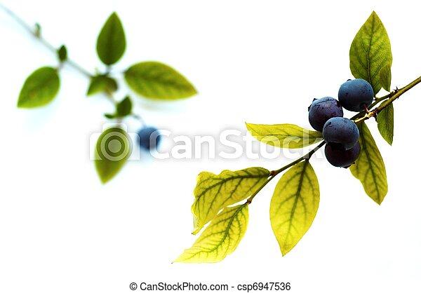 Blueberry - csp6947536