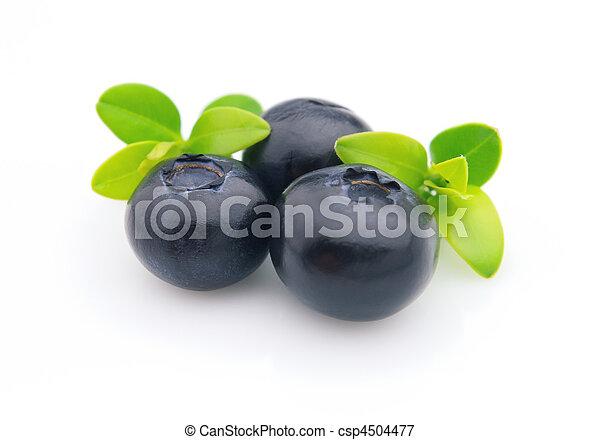 Blueberry - csp4504477