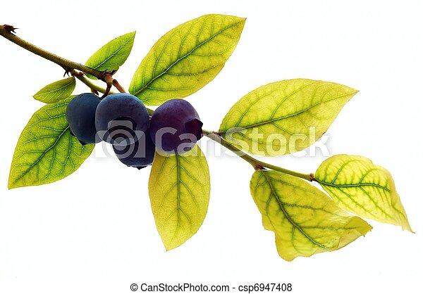 Blueberry - csp6947408