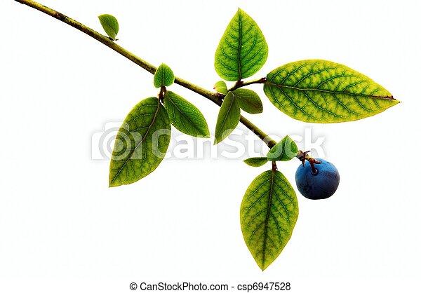 Blueberry - csp6947528