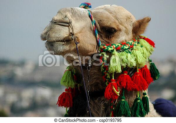 Arab Camel - csp0193795