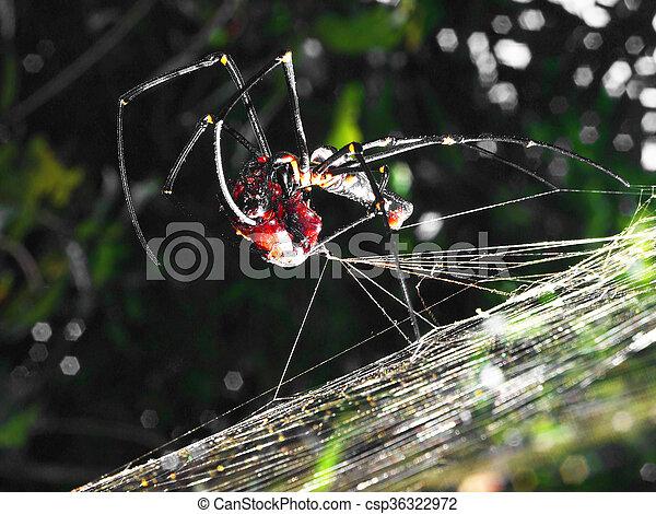 araignés, attaques, victime - csp36322972