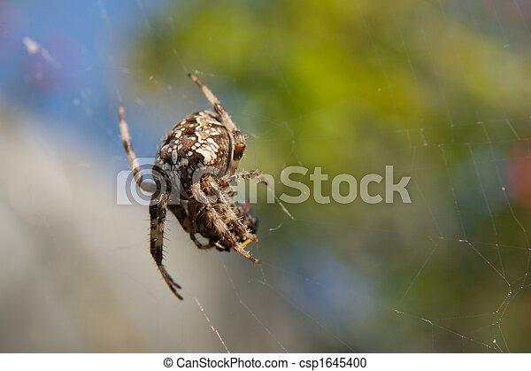 araignés - csp1645400