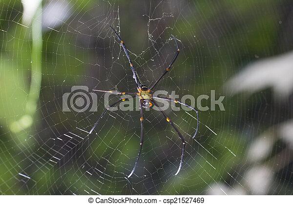 araignés, brun, centre, toile - csp21527469
