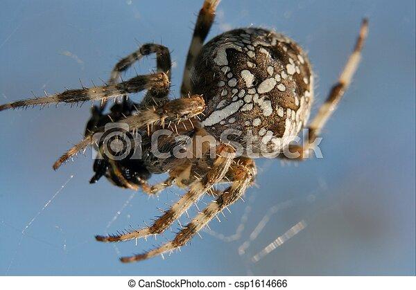 araignés - csp1614666