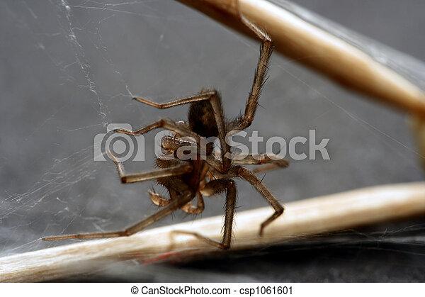 araignés - csp1061601