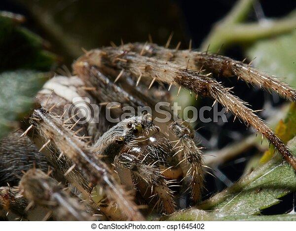 araignés - csp1645402