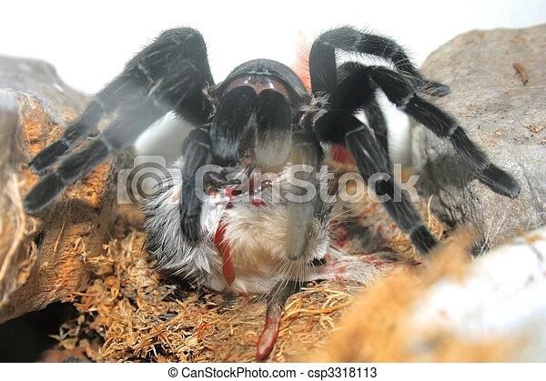 araignés - csp3318113