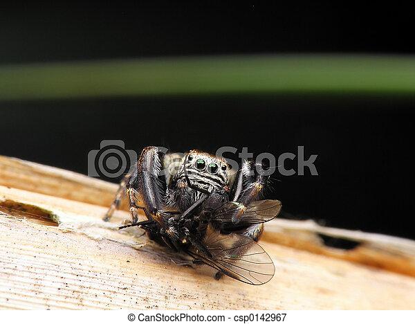 araignés, victime, & - csp0142967