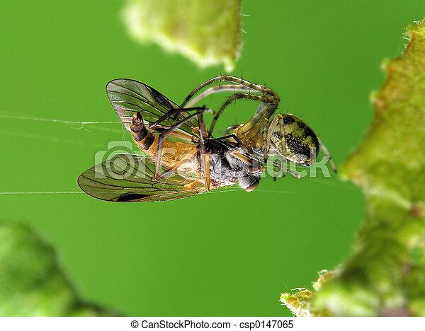 araignés, victime, & - csp0147065