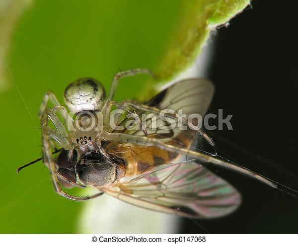 araignés, victime, & - csp0147068