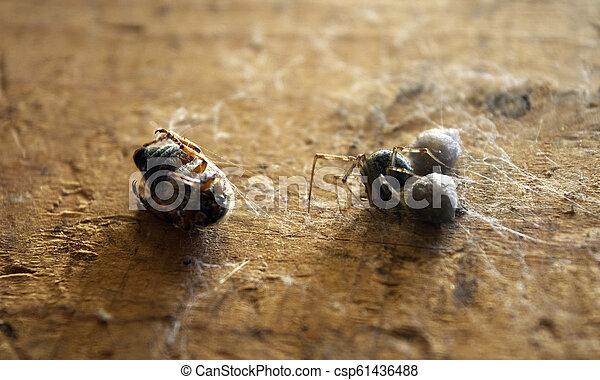 araignés, victime - csp61436488