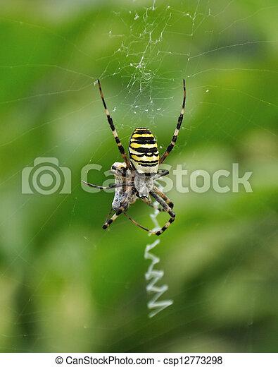 araignés, victime - csp12773298