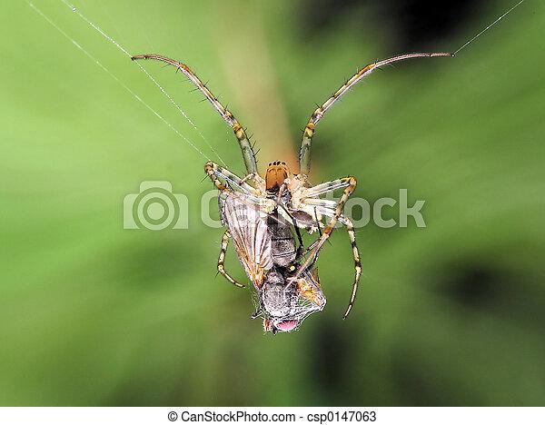 araignés, victime, & - csp0147063