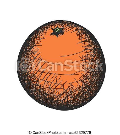arancia, scarabocchiare, illustrazione, vettore - csp31329779