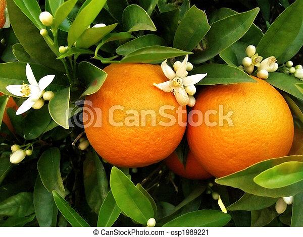 arancio, due, arance - csp1989221