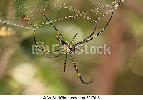 aranha - csp16947616