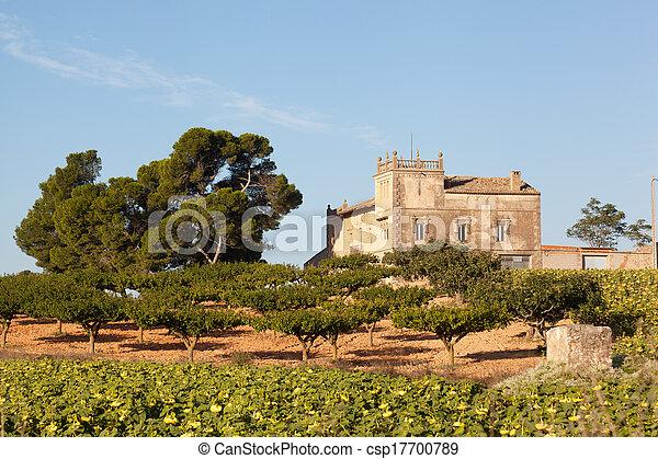 Una propiedad rural con un olivar en España - csp17700789