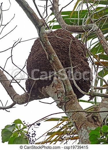 arboreal termite nest - csp19739415
