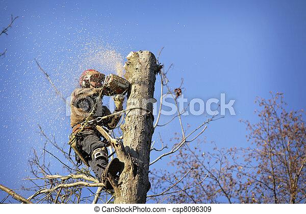 arborist, corte, árvore - csp8096309