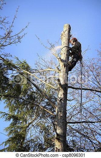 Arborist cutting tree - csp8096301