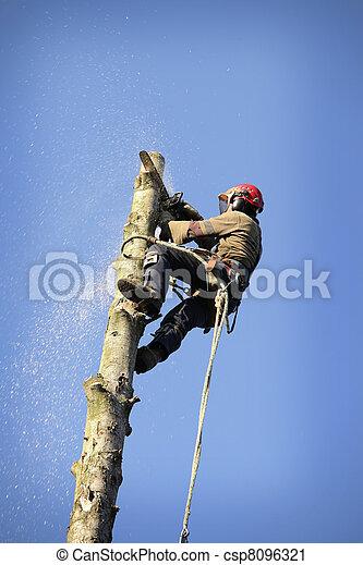 Arborist cutting tree - csp8096321