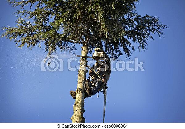 Arborist cutting tree - csp8096304