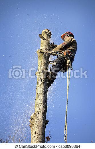 Arborist cutting tree - csp8096364