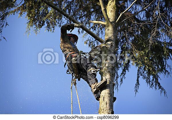 Arborist cutting tree - csp8096299
