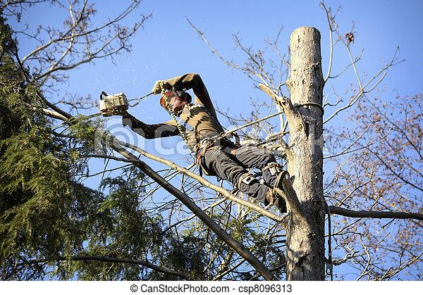 Arborist cutting tree - csp8096313