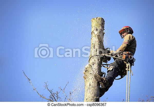 arborist, taglio, albero - csp8096367