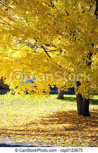 arbre, érable, automne - csp0123675