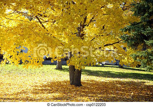 arbre, érable, automne - csp0122203