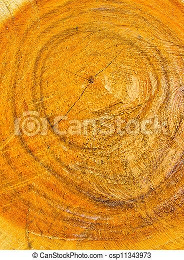arbre, anneaux croissance - csp11343973