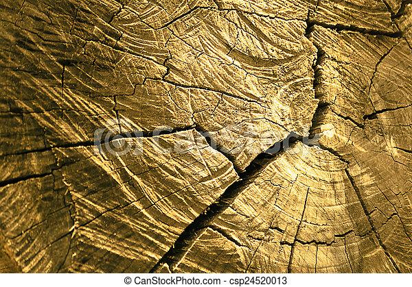 arbre, anneaux croissance, texture - csp24520013