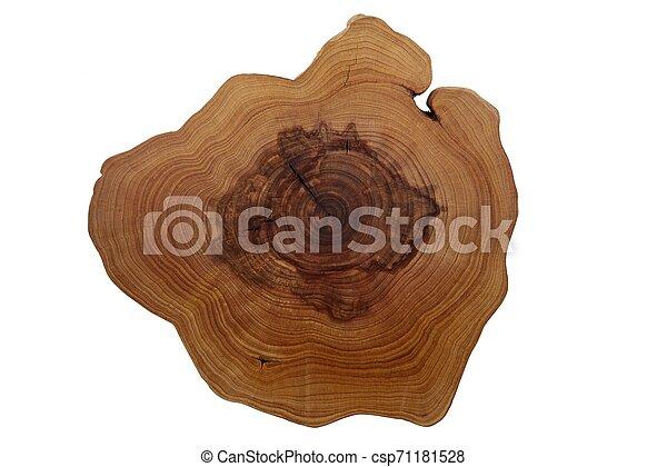 arbre, blanc, coupure, anneaux, croissance - csp71181528
