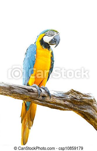 arbre, blanc, macaw, fond, coloré - csp10859179