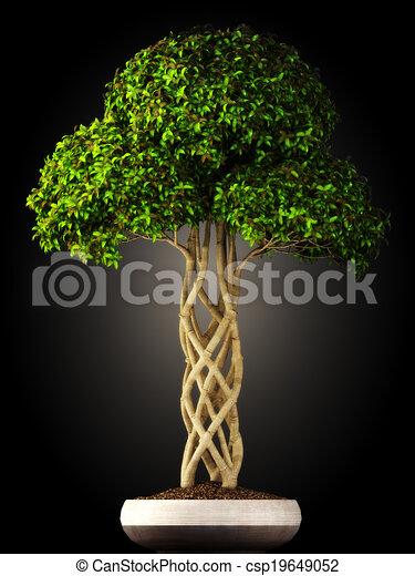 Arbre bonzaies vue c t bonsai gradient arbre - Bonsai arbre prix ...