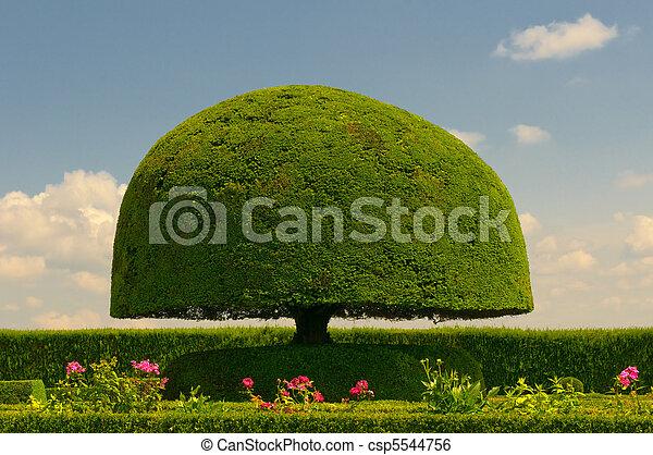 arbre, champignon, formé - csp5544756