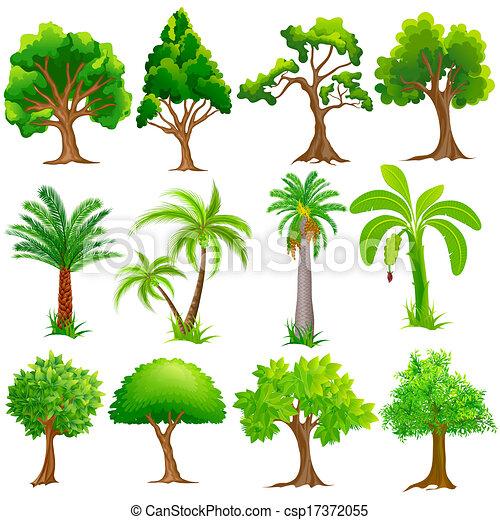 arbre, collection - csp17372055
