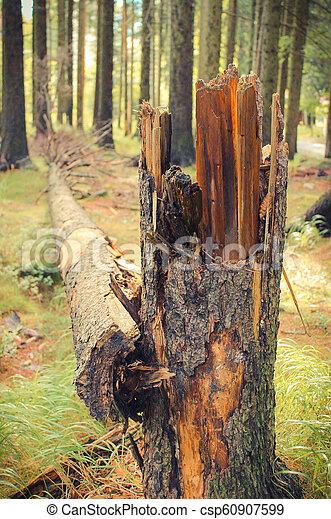 arbre déraciné, après, ouragan, forêt, orage, ou - csp60907599