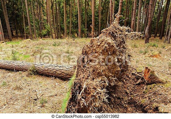 arbre déraciné - csp55013982